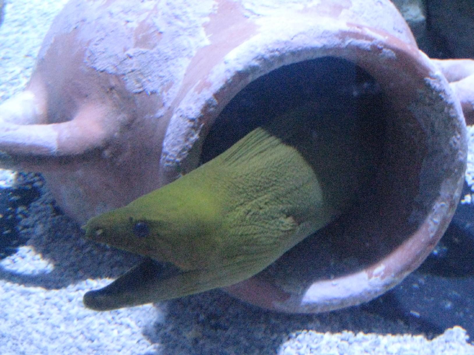 Le Navi Aquarium In Cattolica