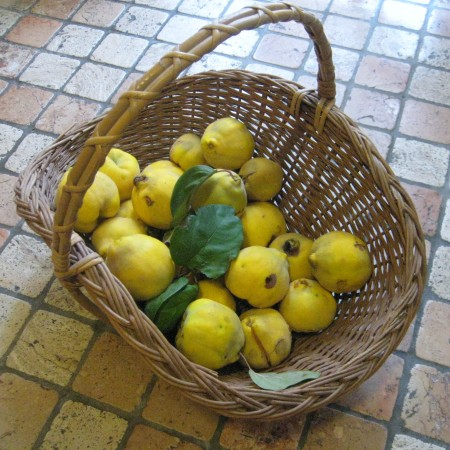 a basketful of quince pears