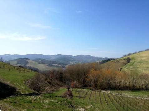 Landscape from the winery close to Urbino